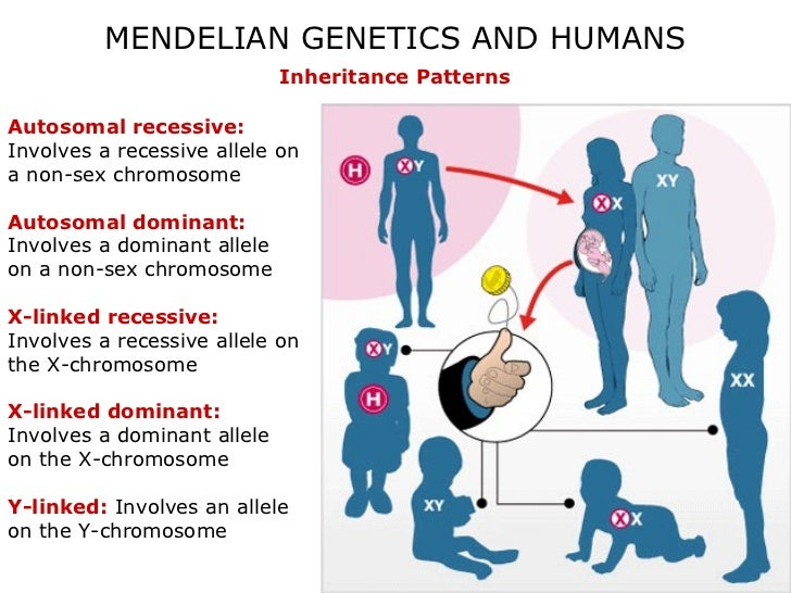 mendel genes and inheritance Mendel found that each of the seven characters considered was controlled by a single gene although gene is a functional unit at the biochemical level, character may be the result of coordination of functions of several genes.
