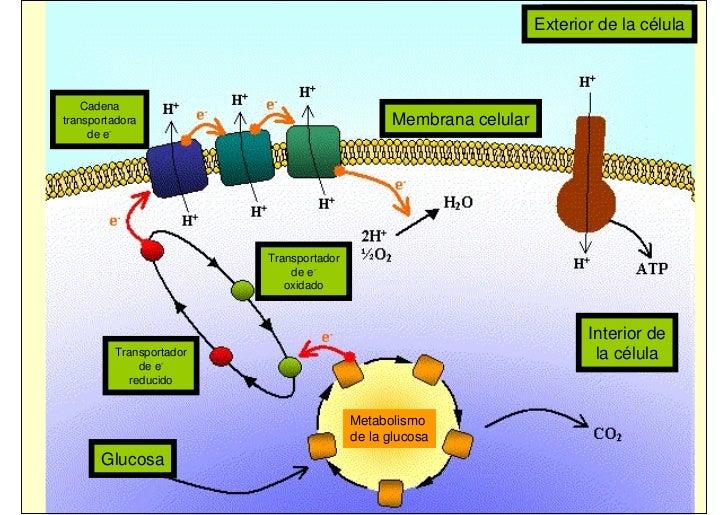 04 metabolismo mg 08 09