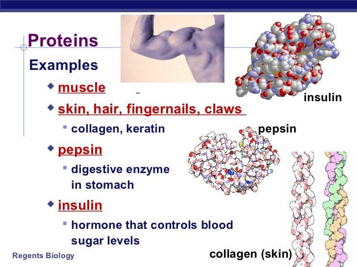 proteins-3-728.jpg?cb=1348916275