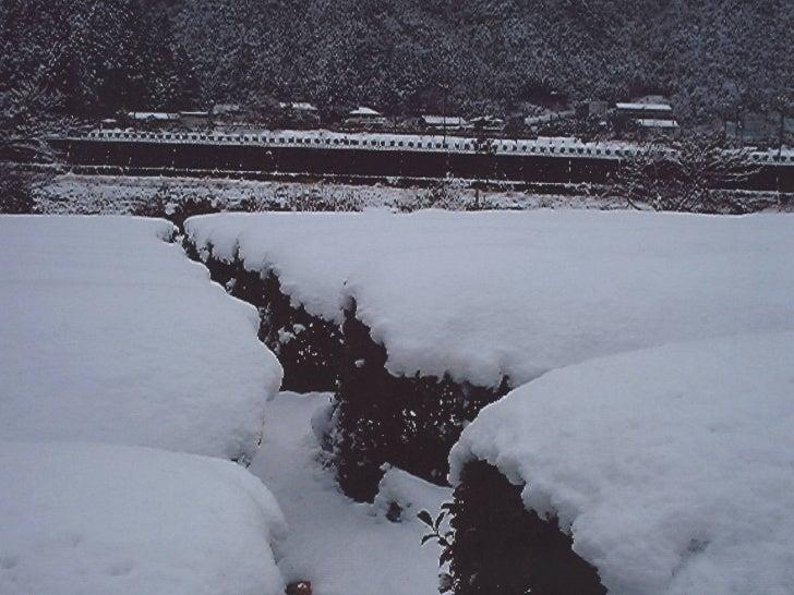 Original Shirakawa Sencha   <ul><ul><li>700 m  über dem Meer, die  Klimagrenze für das Wachstum  von Thea sin. </li></ul><...