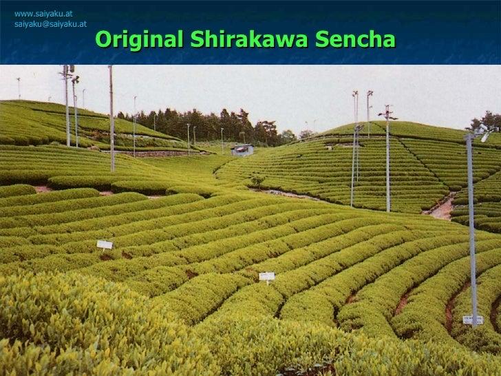 Original Shirakawa Sencha   <ul><ul><li>Die  Teefelder  liegen zwischen  200 und 700 m  über dem Meer,  </li></ul></ul><ul...