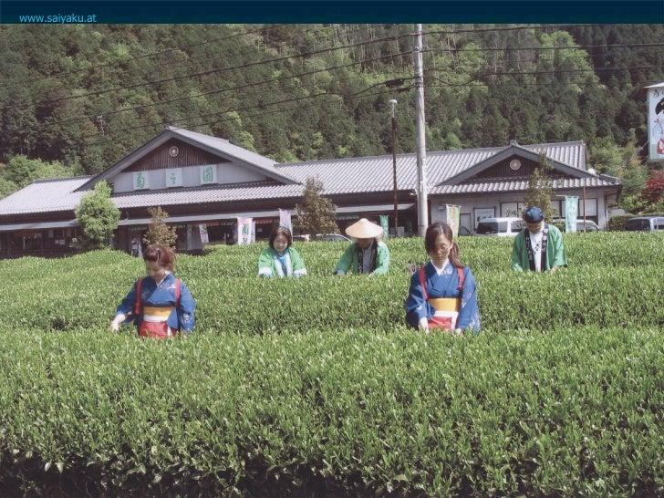 Original Shirakawa Sencha   <ul><ul><li>Die  Teefelder  liegen zwischen  200 und 700 m  über dem Meer, die  Klimagrenze fü...