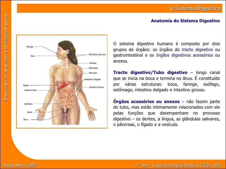 Nuno Melo, 2007 1º Ano - Curso Educaç ão Básica, ESELx (IPL) Elementos de Anatomia e Fisiologia Humana   O Sistema Digesti...