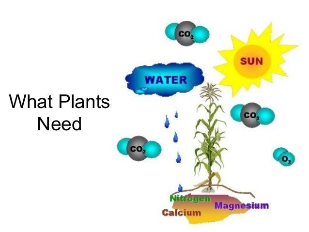 Plants that need no sunlight shade tolerant vegetables - Plants that need no sunlight ...