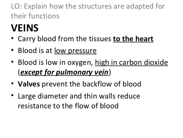how is the structure of arteries and veins adapted for their function Home » current health articles » blood vessels (artery, vein) structure, function, inflammation blood vessels (artery, vein) structure, function,  arteries and.