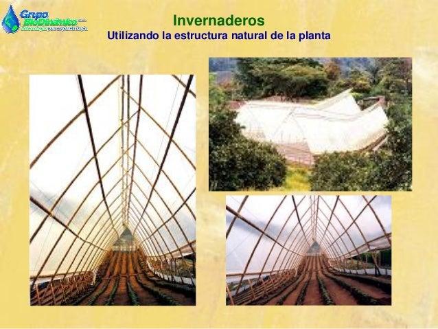 05 for Importancia economica ecologica y ambiental de los viveros forestales