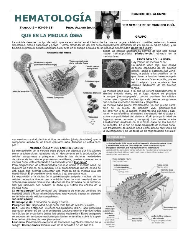 PROF. ÁLVARO IBARRATRABAJO 2— 03-09-15 HEMATOLOGÍA QUE ES LA MEDULA ÓSEA La médula ósea es un tipo de tejido que se encuen...