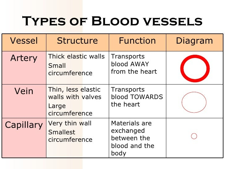 functions of blood vessels Blood vessels, part 1 - form and function: crash course a&p #27 - duration: 9:30 crashcourse 860,111 views 9:30 blood vessel layers tunica intima.