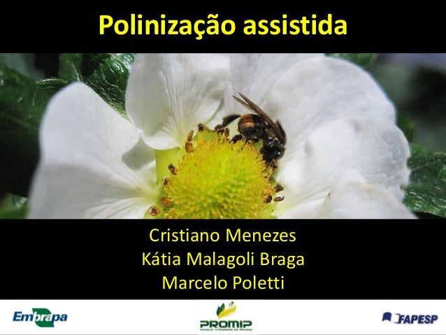 Cristiano Menezes  Kátia MalagoliBraga  Marcelo Poletti  Polinização assistida