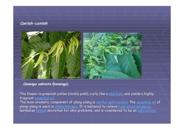 05 divisi magnoliophyta 01 15 ccuart Choice Image