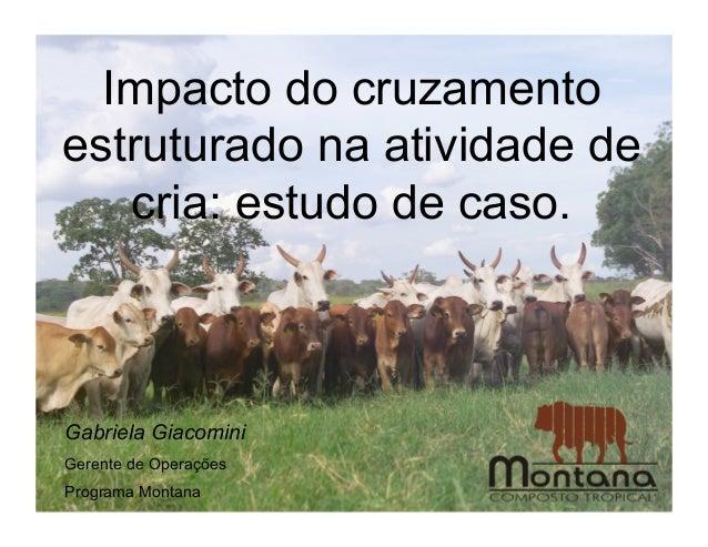 Impacto do cruzamentoestruturado na atividade de   cria: estudo de caso.Gabriela GiacominiGerente de OperaçõesPrograma Mon...