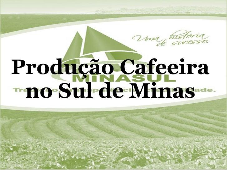 Produção Cafeeira no Sul de Minas