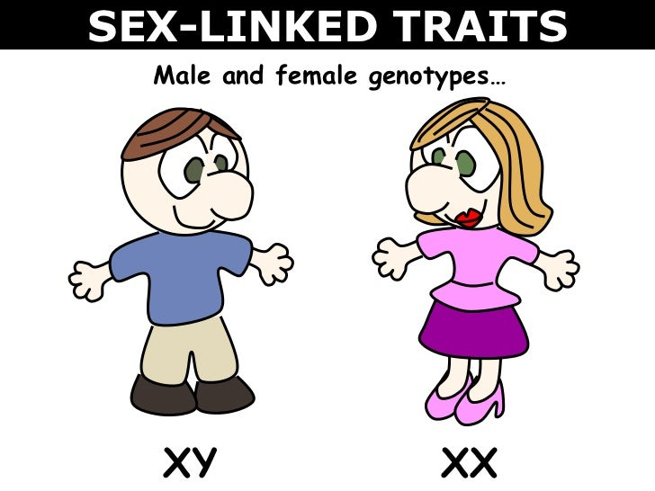 Powerpoint presentations on sex linked traits