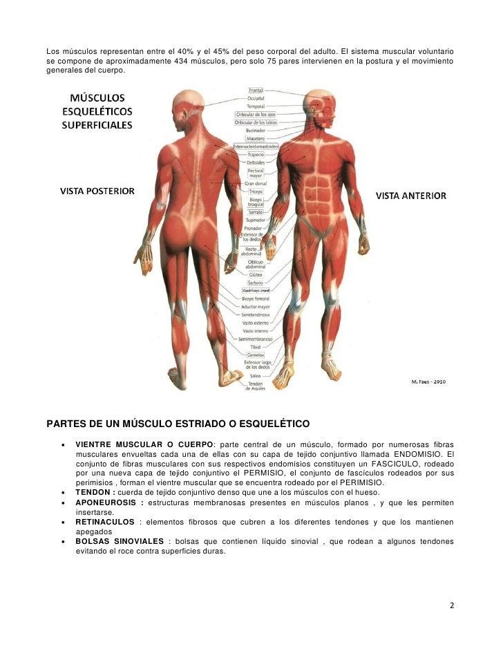 05 sistema muscular