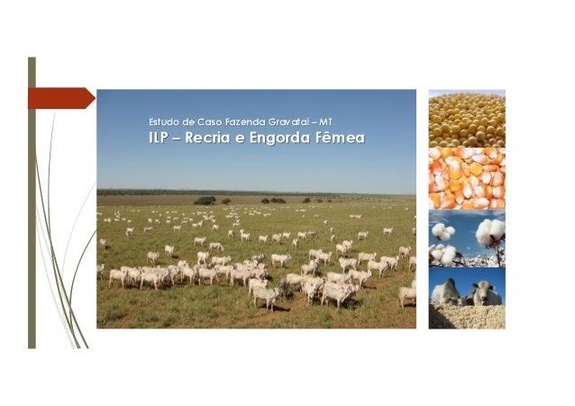 Estudo de Caso Fazenda Gravataí – MT ILP – Recria e Engorda Fêmea