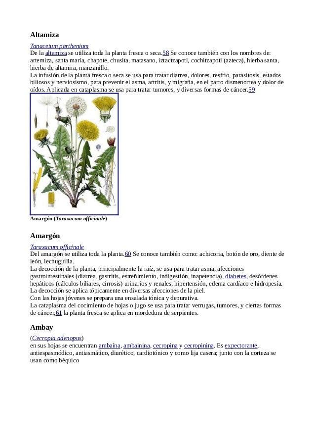 05 04 11 plantas medicinales wikipedia www for Manzanilla planta medicinal para que sirve