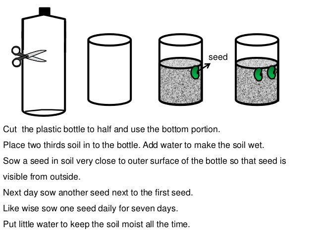 stages of seed germination pdf