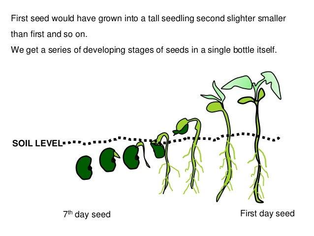 ark how to get weat seeds