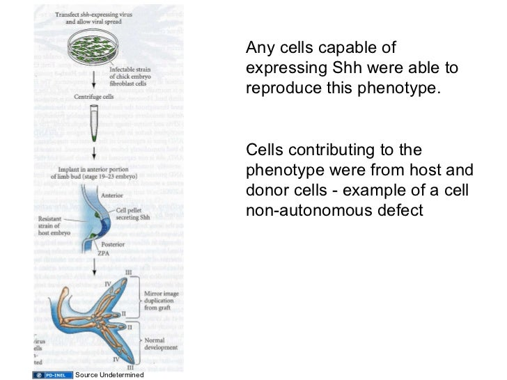 developmental biology gilbert 10th edition pdf