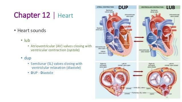 BIO101_Ch 12_Cardiovascular
