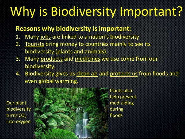 tourism and biodiversity essay View this essay on sustainable tourism does not destroy due to the increased tourism, biodiversity and ecosystems can be interrupted by loss of wildlife.