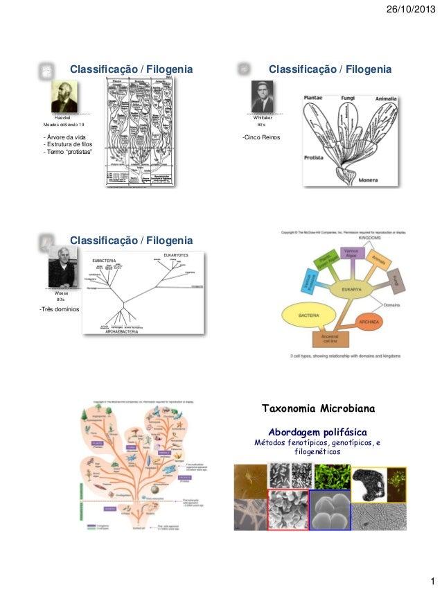 26/10/2013  Classificação / Filogenia  http://evolution.berkeley.edu/evosite/resources/readings_dawson2.shtml  Classificaç...