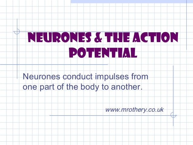 Neurones & the Action      PotentialNeurones conduct impulses fromone part of the body to another.                    www....