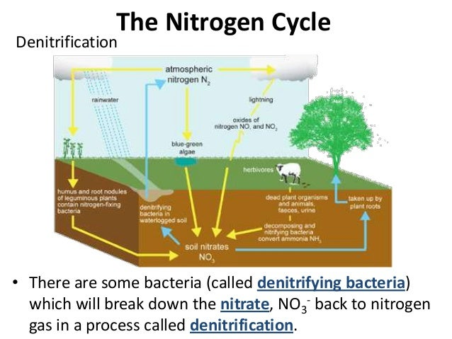 05 Ecological Niches And Cycles