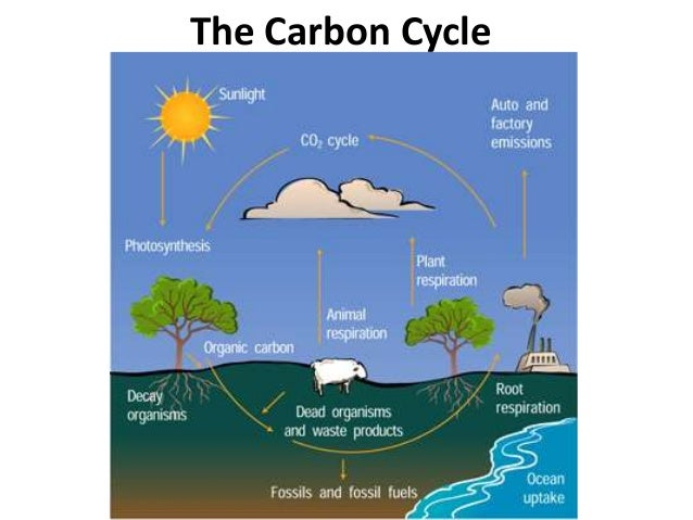 Fast cycle diagram search for wiring diagrams 05 ecological niches and cycles rh slideshare net venn diagram water cycle diagram ccuart Gallery