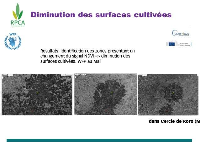 Superficie cultivées. Diminution des surfaces cultivées dans Cercle de Koro (M Résultats: Identification des zones présent...