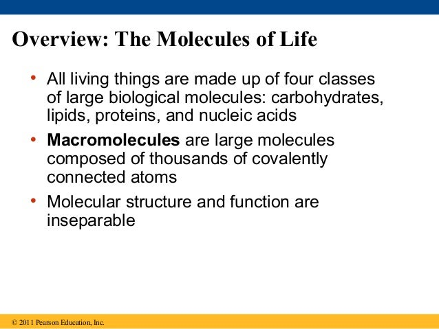 Ch 5 The Structure and Function of Large Biological Molecules – Biological Molecules Worksheet