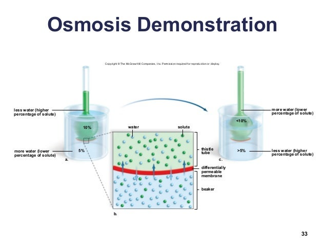 demonstration of osmosis in potato Part i of this lab is a demonstration of the semi-permeable nature of cell reports  are due  biology: osmosis and diffusion lab using potato cores lab report.