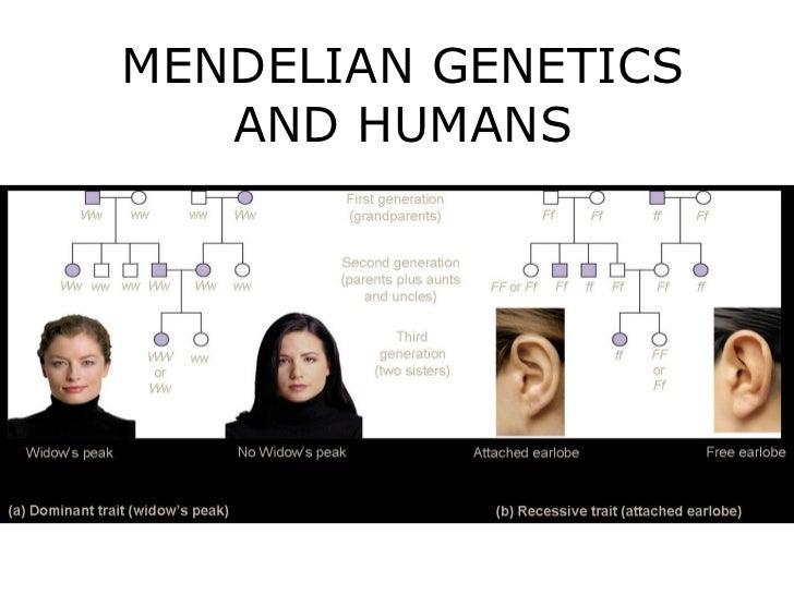 MENDELIAN GENETICS   AND HUMANS