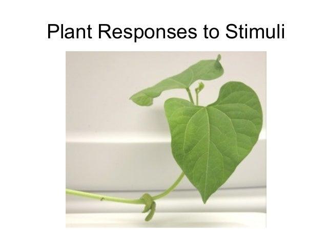 Plant Responses to Stimuli