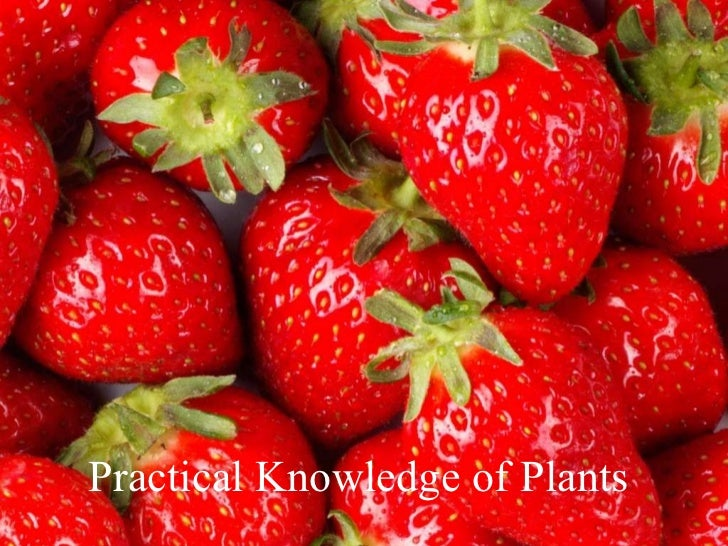 Practical Knowledge of Plants