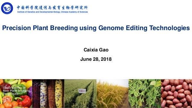 Precision Plant Breeding using Genome Editing Technologies Caixia Gao June 28, 2018