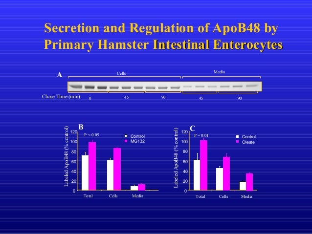 Secretion and Regulation of ApoB48 by Primary Hamster Intestinal EnterocytesIntestinal Enterocytes B C LabeledApoB48(%cont...