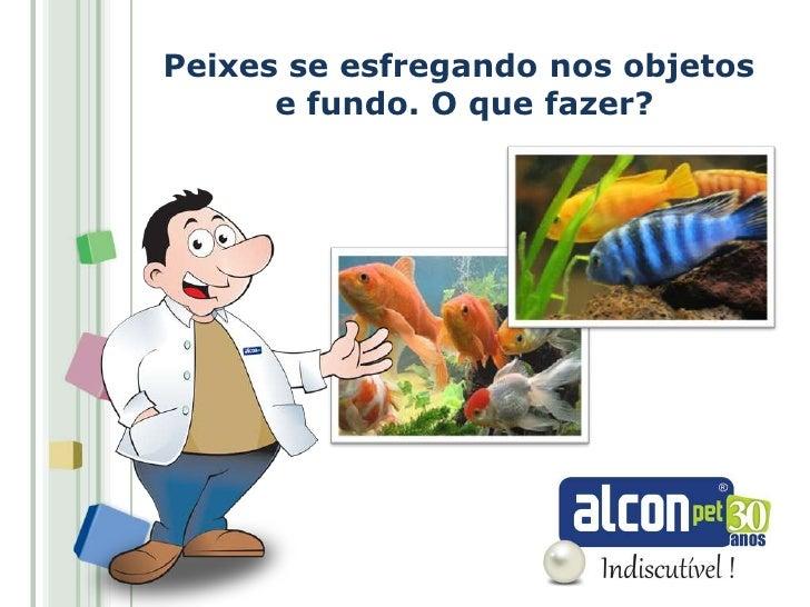 Peixes se esfregando nos objetos      e fundo. O que fazer?