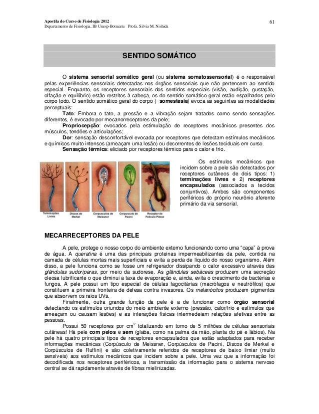 61  Apostila do Curso de Fisiologia 2012 Departamento de Fisiologia, IB Unesp-Botucatu Profa. Silvia M. Nishida  SENTIDO S...