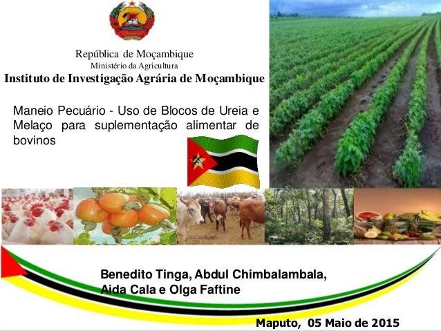 1 República de Moçambique Ministério da Agricultura Instituto de InvestigaçãoAgrária de Moçambique Maneio Pecuário - Uso d...