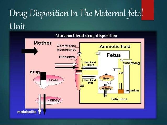 Drug Disposition In The Maternal-fetal Unit