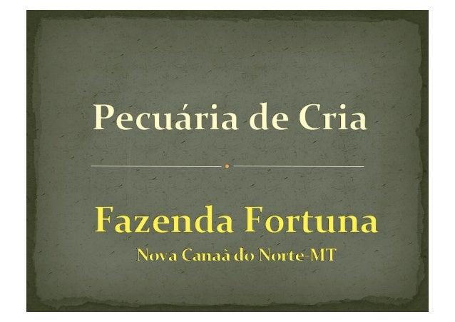 Daniel Pereira Wolf Administrador de Empresas Diretor da Fortuna Nutrição Animal  Pecuarista...