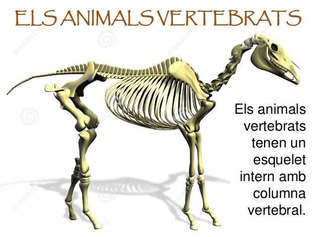 Resultado de imagen de VERTEBRATS