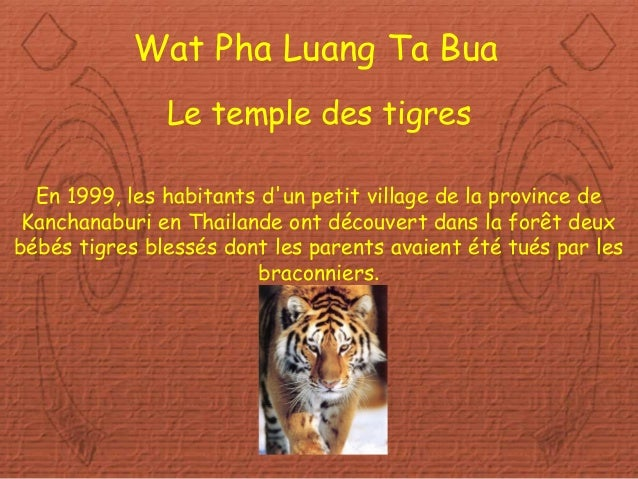 Diaporama PPS réalisé pour http://www.diaporamas-a-la-con.com Wat Pha Luang Ta Bua Le temple des tigres En 1999, les habit...