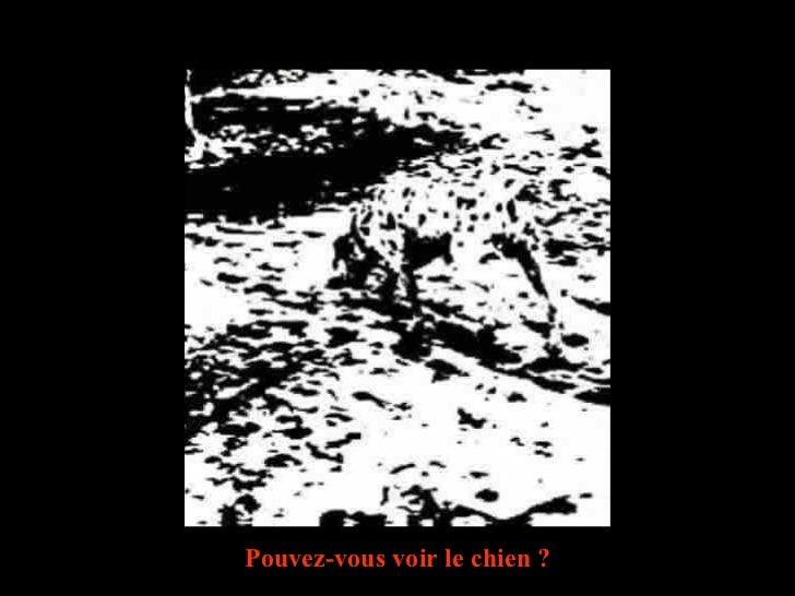 Diaporama PPS réalisé pour  http://www.diaporamas-a-la-con.com Pouvez-vous voir le chien ?