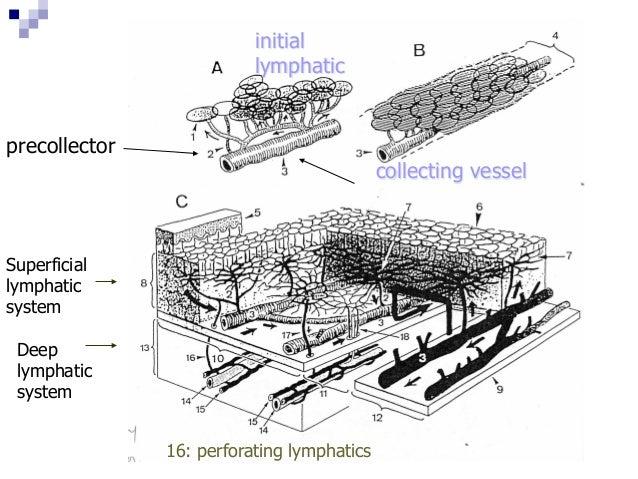 楊靜蘭物理治療師-認識淋巴系統水腫與照顧方法20130602