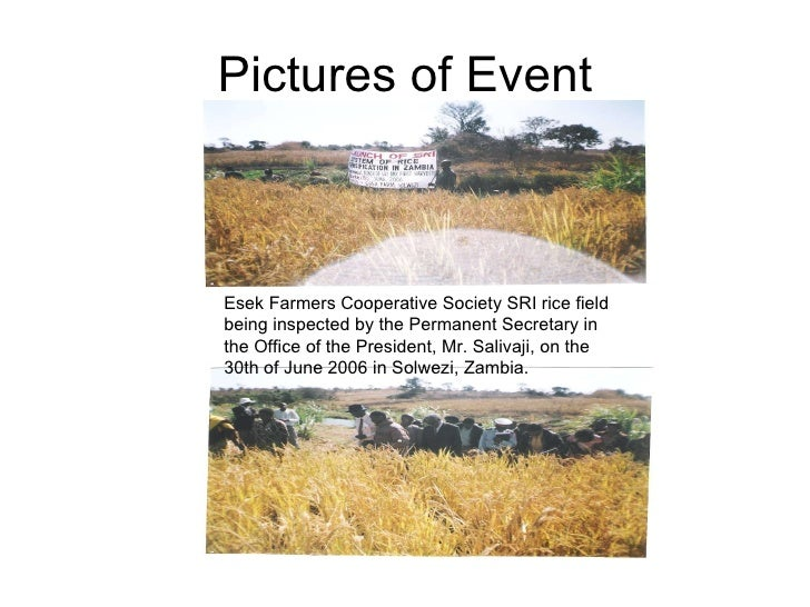 Pictures of Event Esek Farmers Cooperative Society SRI rice field being inspected by the Permanent Secretary in the Office...