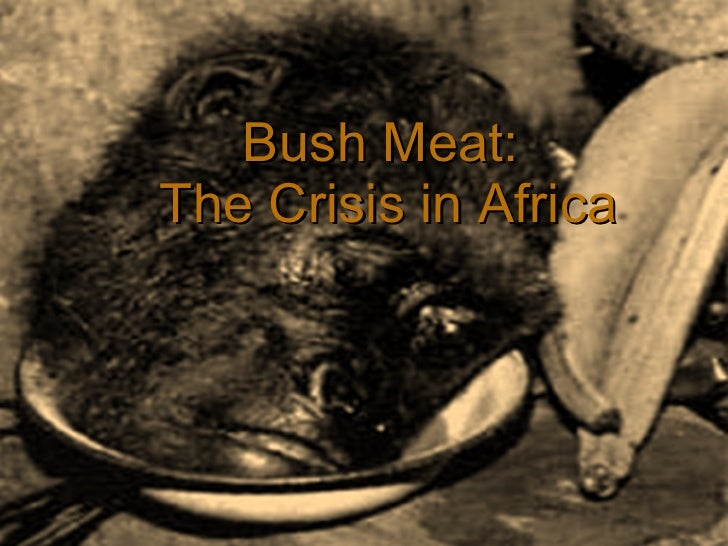 *1 Bush Meat: The Crisis in Africa