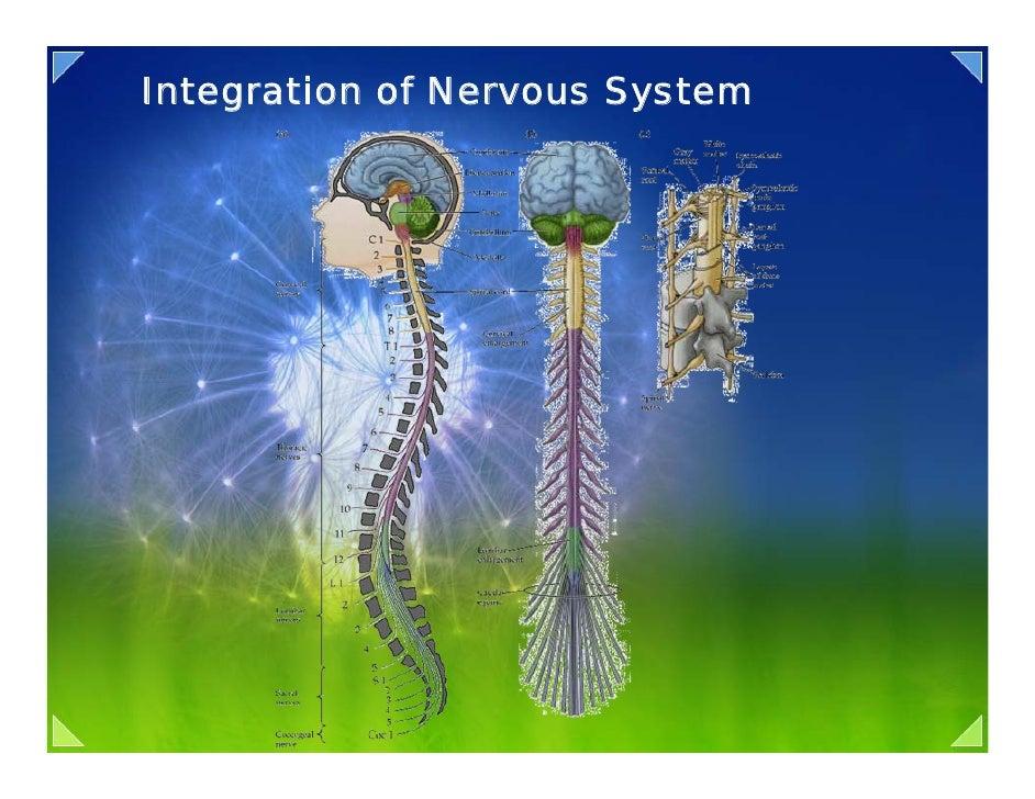 Integration of Nervous System