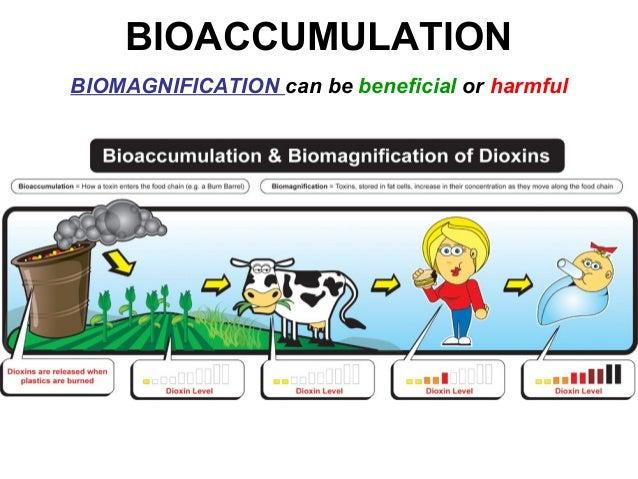 06 Bioaccumulation on Infographic Essential Vitamins